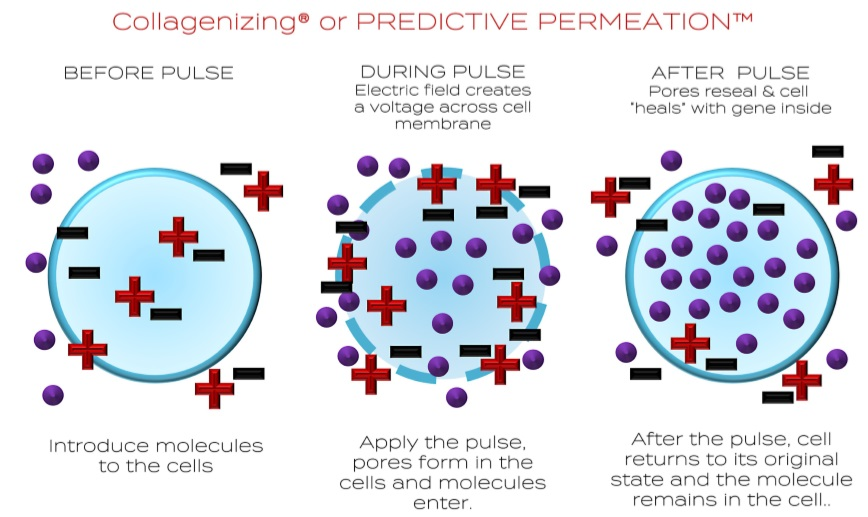 Predictive Permeation